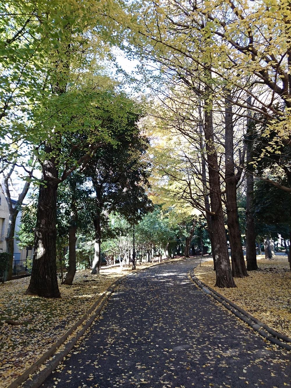 S park1