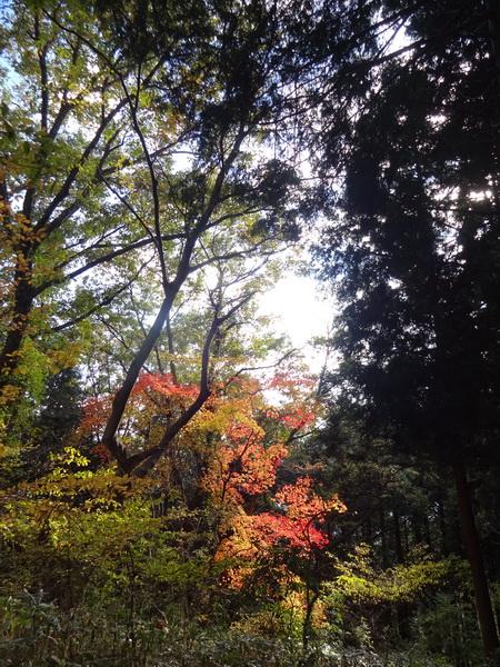 秋登山03